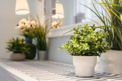 Dekorera med krukväxter