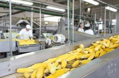 Hur påverkar livsmedelsbearbetning näringsvärdet?