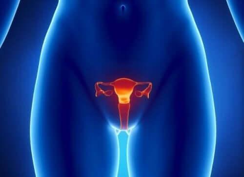 Kvinnans äggstockar