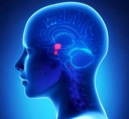 Basala ganglier i hjärnan