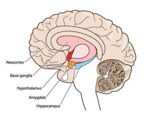 Orsaker till atetos och rörelsestörningar