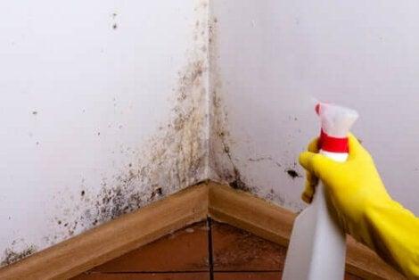 Använda fettlösningsmedel på vägg