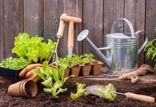 Trädgårdsredskap för en urban trädgård.