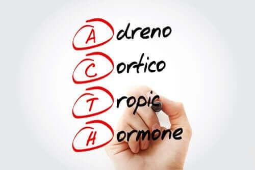 Egenskaper och effekter hos hormonet kortikoliberin
