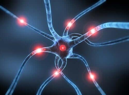 Parkinsons sjukdom neuroner i hjärnan