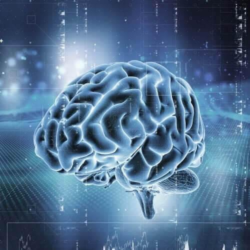 Hur fungerar hjärnans belöningssystem?