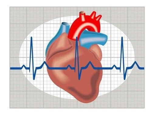 hjärta och sinusrytm