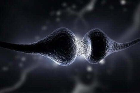 koppling mellan nerver