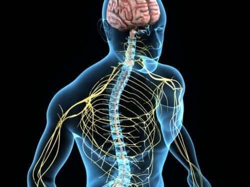 darrande händer: illustration av nervsystemet