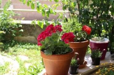 Sommarens blommor: sex vackra alternativ för heta lägen