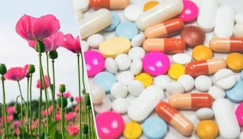 Smärtbehandling med opioider och vallmo