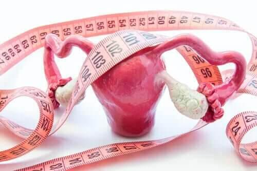 Polyper i livmodern: livmoder i plast och måttband