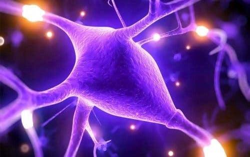 höga nivåer av magnesium: nerver