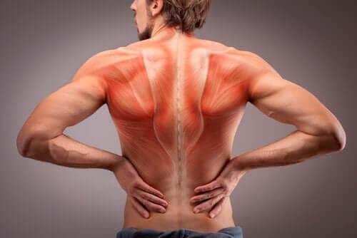 Lär dig mer om anatomin i vår ryggmuskulatur