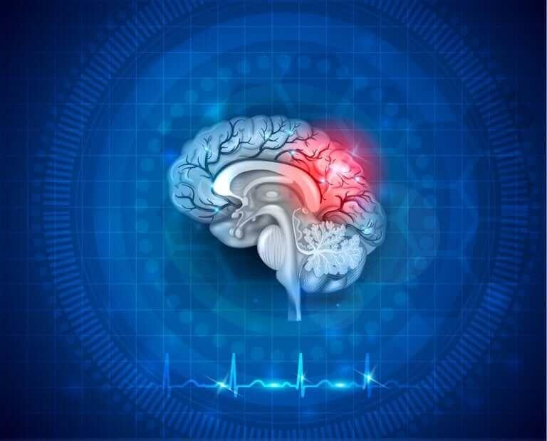 Illustration med ett område av hjärnan upplyst.