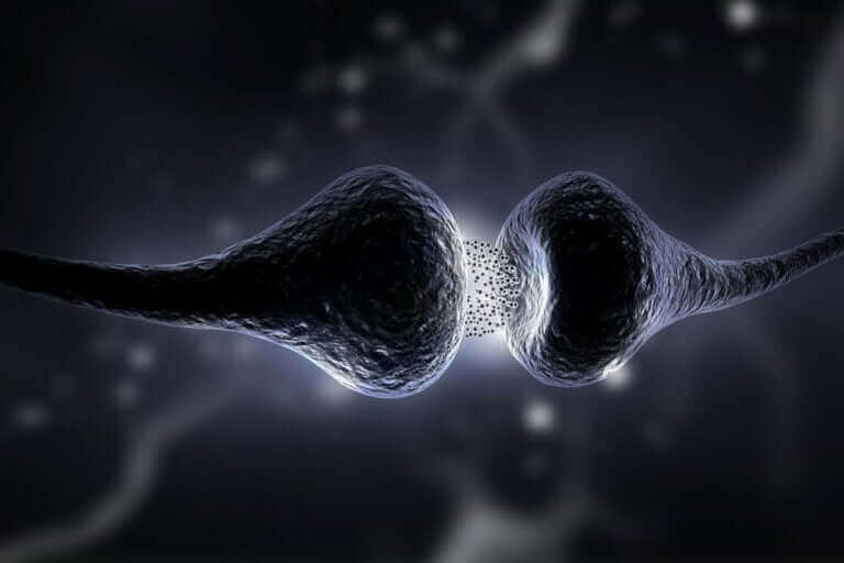 Illustration av hur synapser kopplar ihop med varandra i hjärnan.