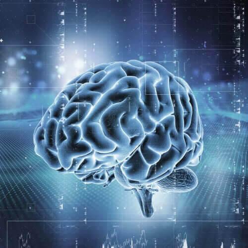 hjärnan beroende av opioider