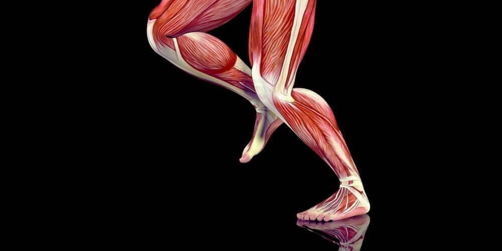vad är utlösningspunkter: musklerna i benen