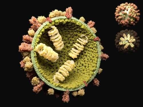 Lär dig mer om reproduktionscykeln för virus