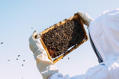 Biodlare med sina bin