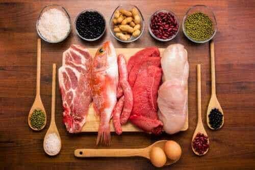Allt om proteiners funktion i kroppen