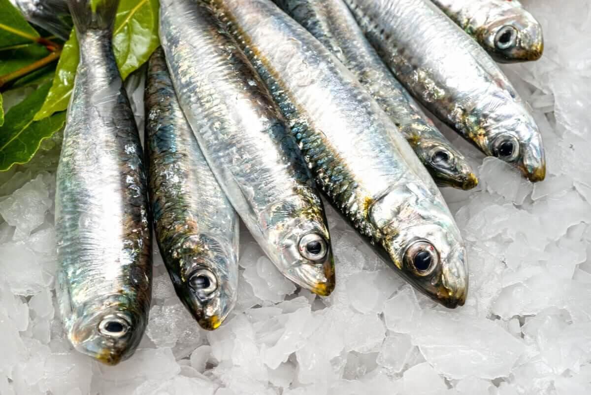 fördelarna med sardiner