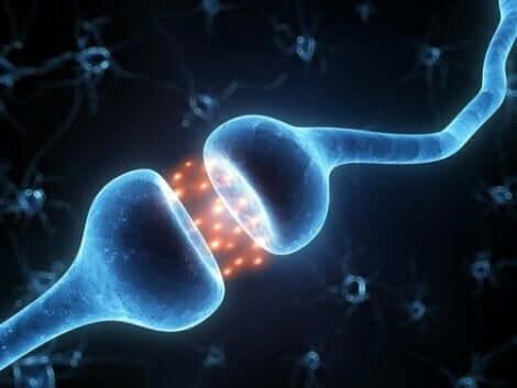 Multipel skleros: Animerad bild av neuroner som kommunicerar.