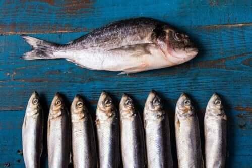 Kolesterol i skaldjur: En bild på olika feta fiskar.