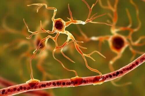 Hjärnans nervsystem.