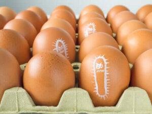 Varför ökar antalet fall av salmonella på sommaren?