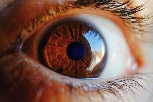 Ta reda på hur ögat rengör sig själv