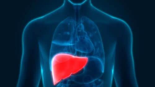 alkoholinducerad hepatit