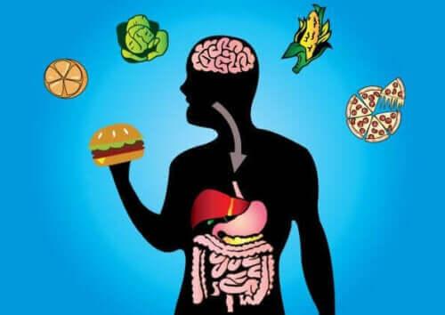Illustration hur hamburgare metaboliseras i kroppen.