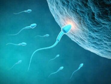 Förbättra kvaliteten på dina spermier: börja med kosten