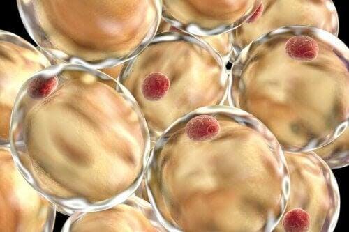 fettceller