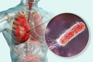 Finns det bakterier i lungorna?