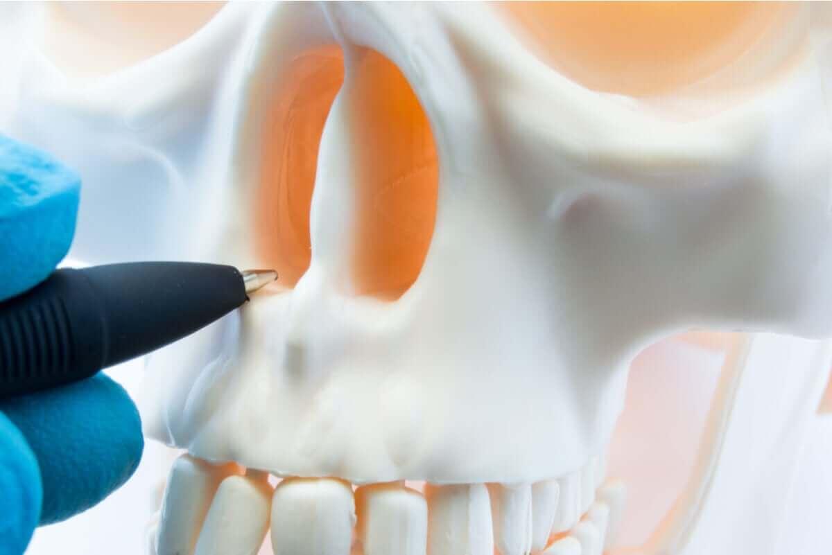 penna pekar på näsan på en dödskalle