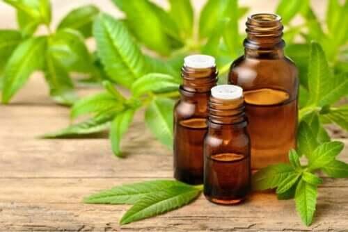 olja av medicinalväxten järnört