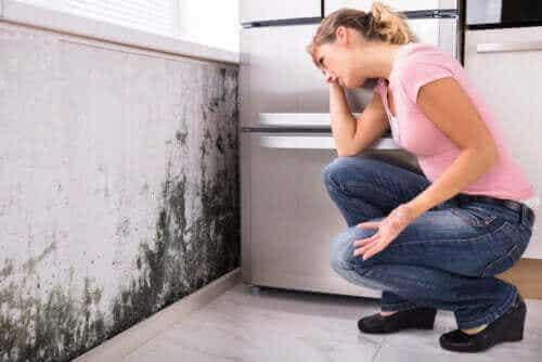 Mögel och hälsoproblem: är det farligt med mögel i huset?