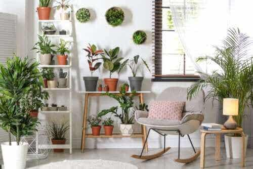 Tåliga växter som inte kräver mycket vård