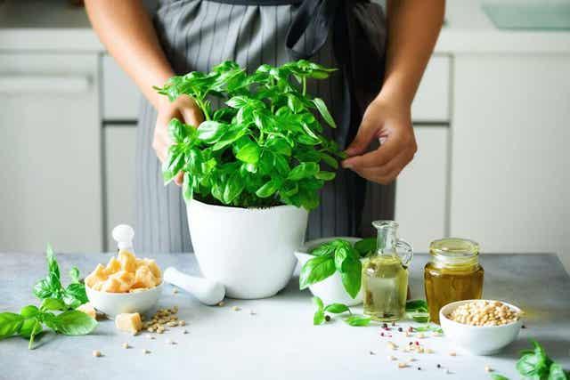 Man kan använda basilika vid matlagning i köket.