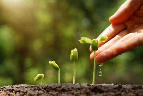 Upptäck 6 tips för en hållbar trädgård