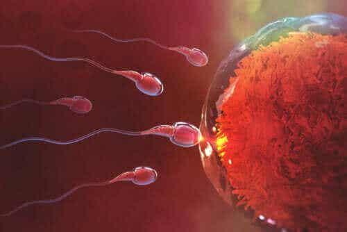 Hur lång tid tar det att bli gravid efter samlag?