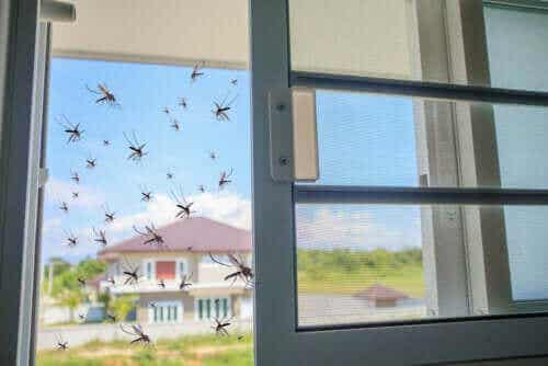 Basilika: en naturlig huskur mot myggor