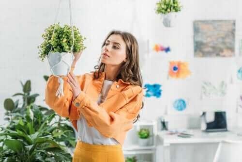 Så här kan du göra en egen ampel till dina växter