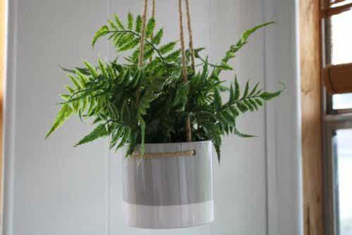 hammagjord ampel till dina växter